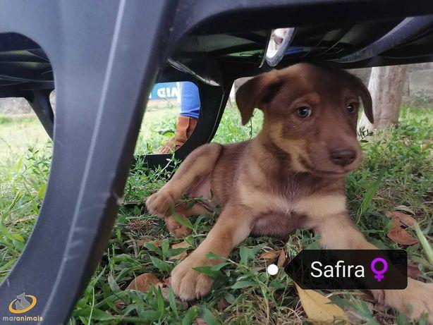Para adoção: Safira