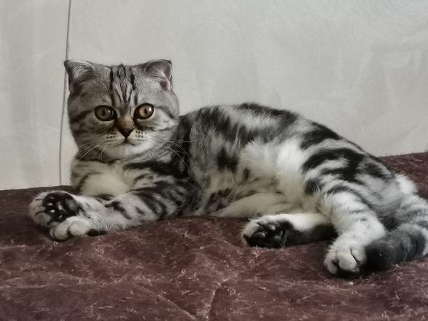 Котик. Мальчик - красавчик