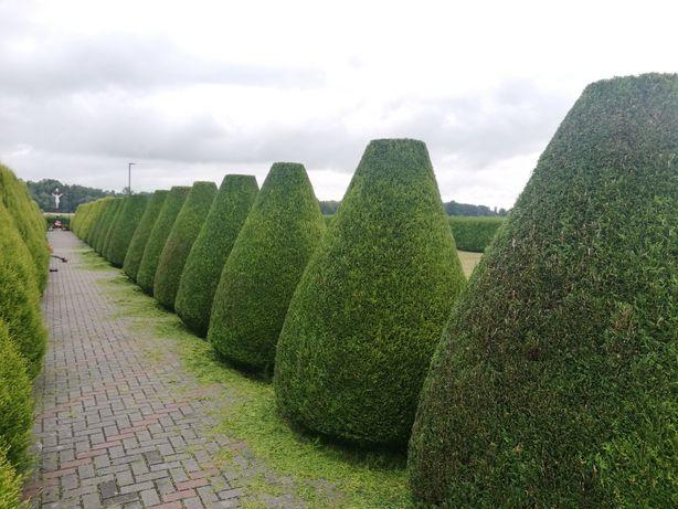 Ogród/Las Koszenie traw, przycinanie krzewów, wycinka drzew