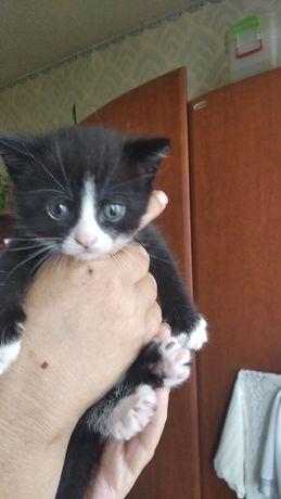 Отдам котят в хорошие руки родились 10 июля 2020 в 00:25