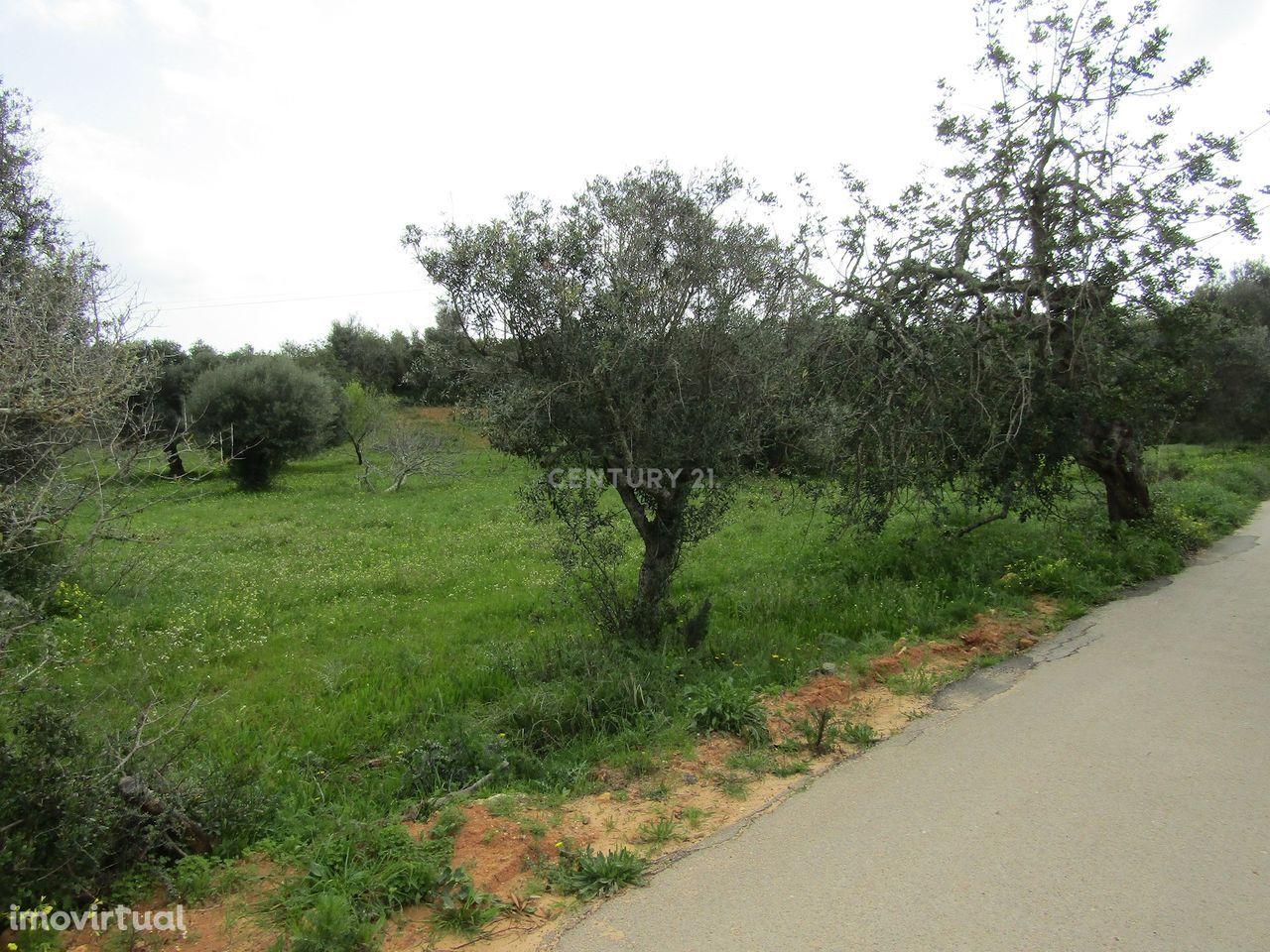Terreno Rústico em Amendoal, Vale Parra