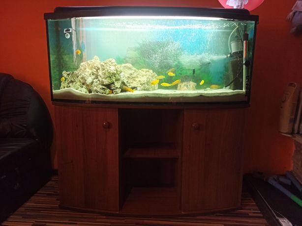 Akwarium panoramiczne 240l