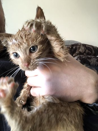 Kot w dobre ręce