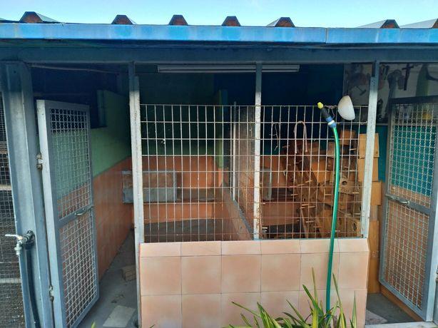 Hotel Canino - Canil para o seu cão em viagen