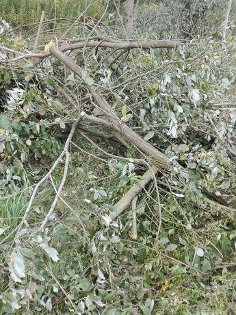 Oddam drewno gałęzie na opał