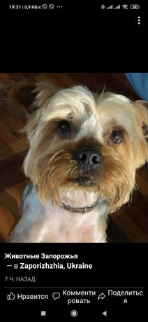 Пропала найдена собака ДД