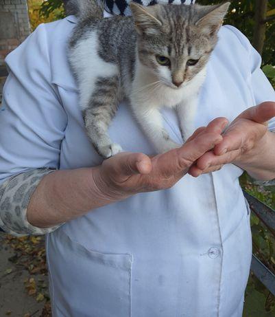 Шукає домівку дуже ласкаве котенятко