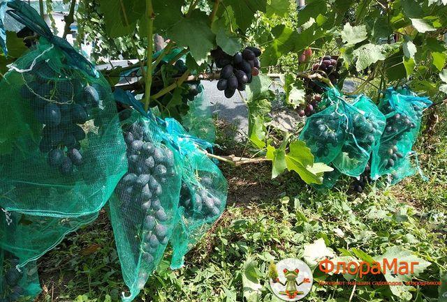 Сетка-мешок для винограда от ос. Мешочки для винограда. Мешок от ос