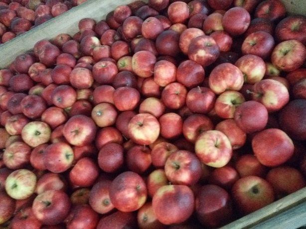 Jabłka prosto od sadownika