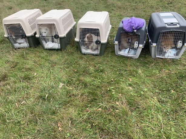 Доставка животных в Европу, США, Канаду. Перевозка, delivery pets