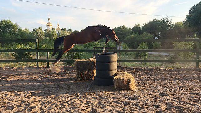 Лошадь, конь, мерин, кобыла, жеребец