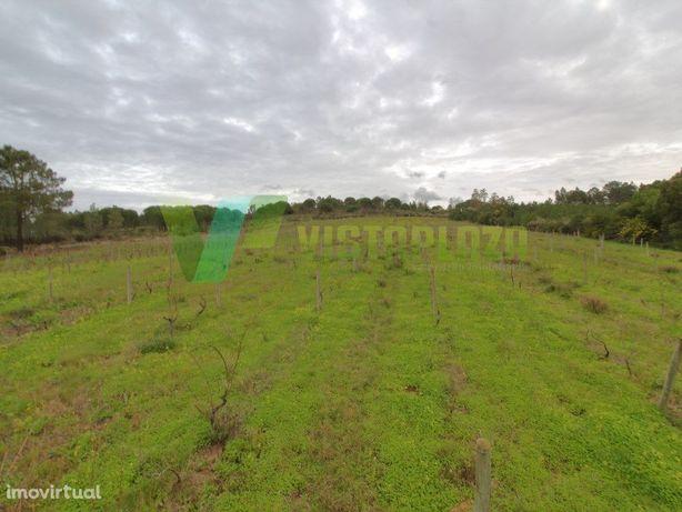Terreno Rústico em Aljezur, Com 50000m2 Área, Vinha Regis...