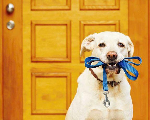Passeio cães na zona da Ajuda/Restelo