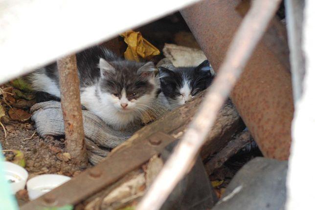 Маленькие котята ищут теплый дом