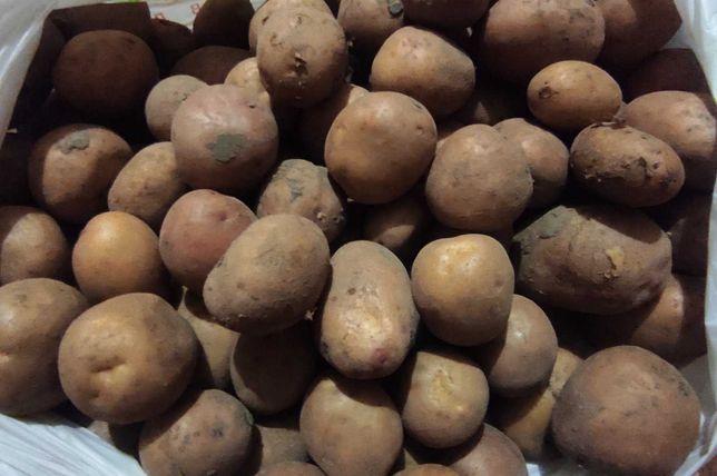 Продам мелкий картофель