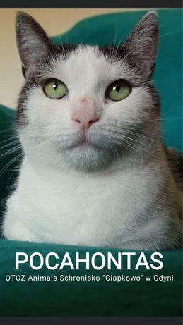 Znaleziona kotka-Pocahontas gotowa do ADOPCJI