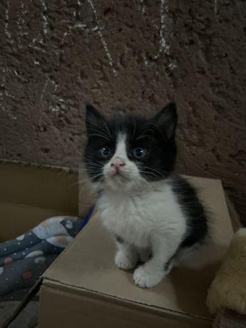 Котята 1 месяц, очень ласковые и чистоплотные