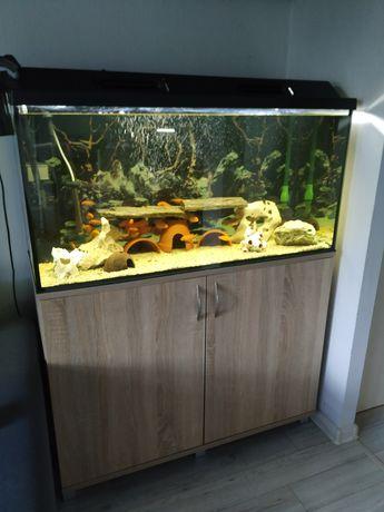 Zestaw akwariowy z rybami