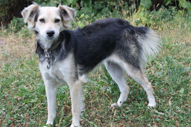 Джульетта - собака друг!