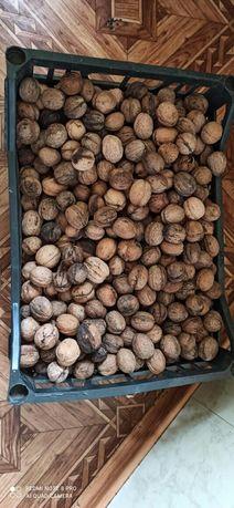 Орехи в ящике продам