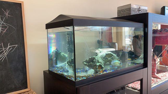 Peixes com Aquário 50L