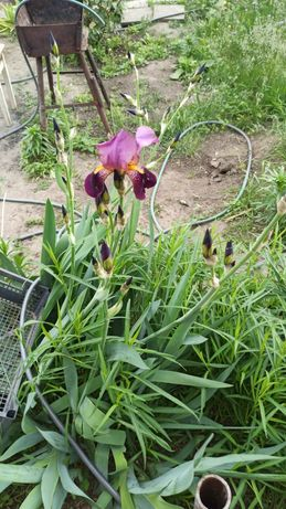 Выполняю работы в саду, в огороде, во дворе.