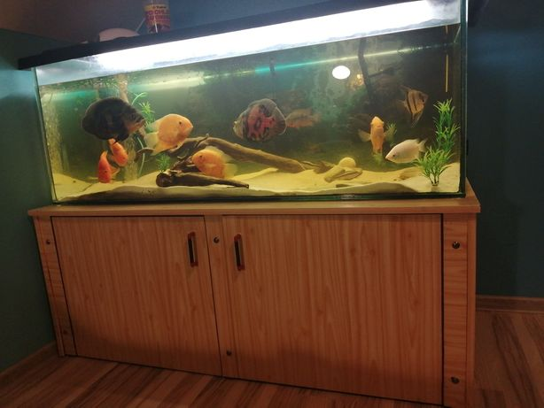 Akwarium z rybami 350 l