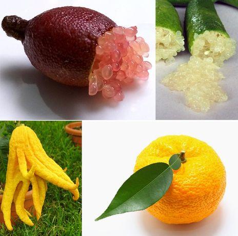 Frutas ZERO PESTICIDAS, Kiwi, Limão Caviar, Yuzu, Mão de Buda, Toranja