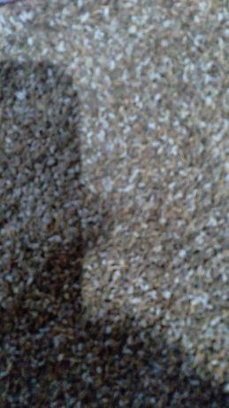 Семена петрушки листовой.