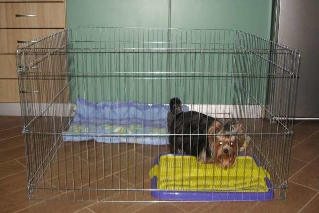 Вольер клетка барьер манеж для собак 100х100х60h приучение к лотку