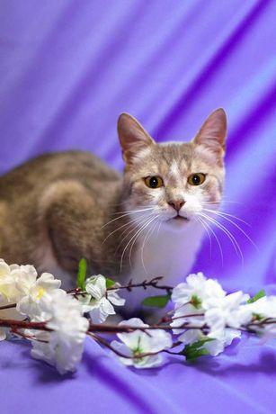 Красавица кошка Маргоша, само обаяние и домашний уют (4 года)