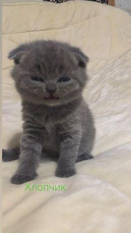 Весловухий кіт  хлопчик