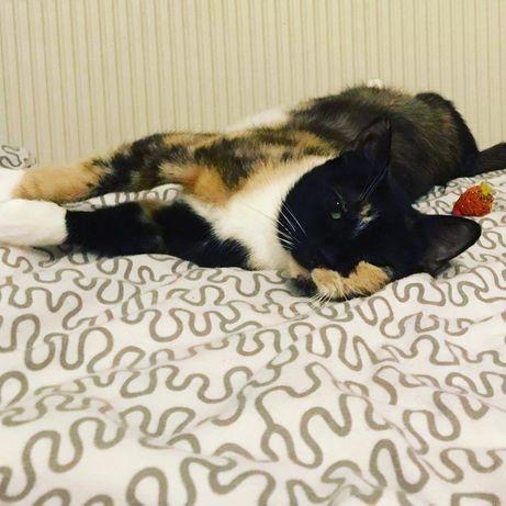 Uratowane koty czekaja na domy