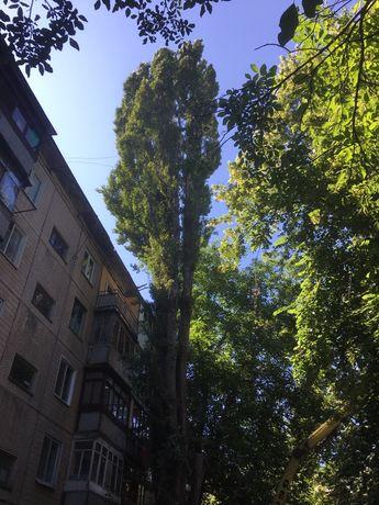 Спил, Обрезка Омоложение Деревьев