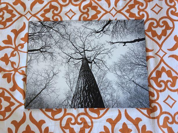 Quadro árvores - preto e branco