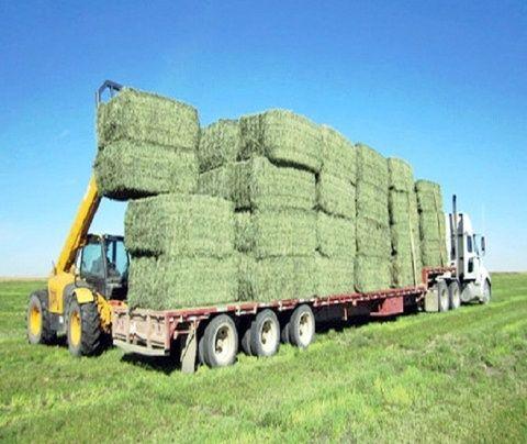 Сено люцерны луговое с доставкой по Украине звоните