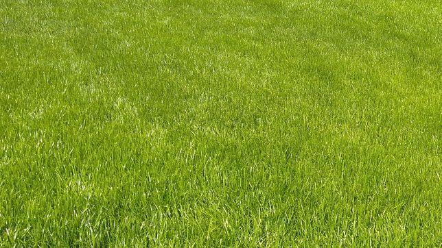 Usługi glebogryzarką separacyjną, zakładanie trawników, nawadnianie