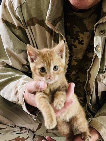 Рыжая девочка котенок