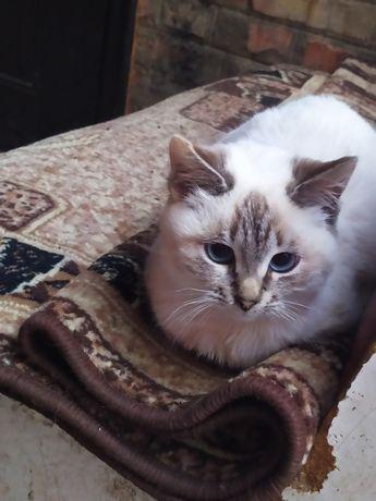 Котики в добрые руки кот кошка