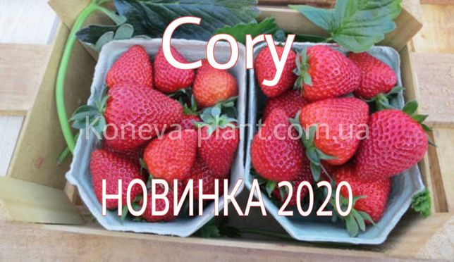 Саженцы клубники фриго Кори (Cory).
