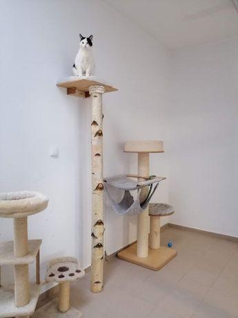 Piękny naturalny drapak dla kota - wspinaczka po drzewie !