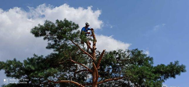 Usługi arborystyczne, wycinka drzew, pielęgnacja drzew
