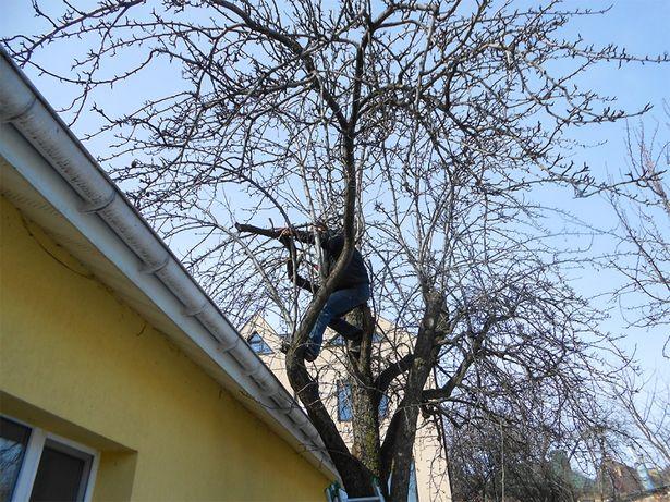 ОСЕННЯЯ обрезка деревьев. ОБРЕЗКА сада. САДОВНИК Обработка препаратам