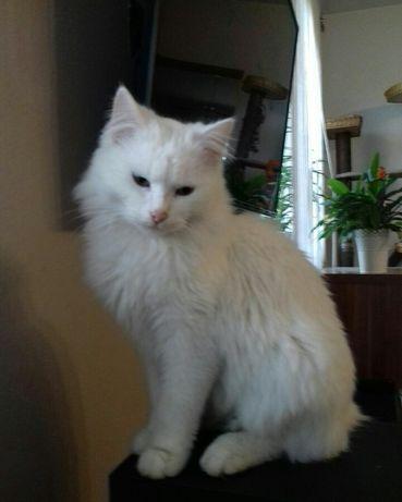 zaginął  biały  kot