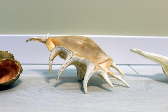 Обмен океанские ракушки раковины. Статуетки.