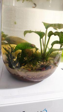 Biosfera aquática (aquário sem filtro)