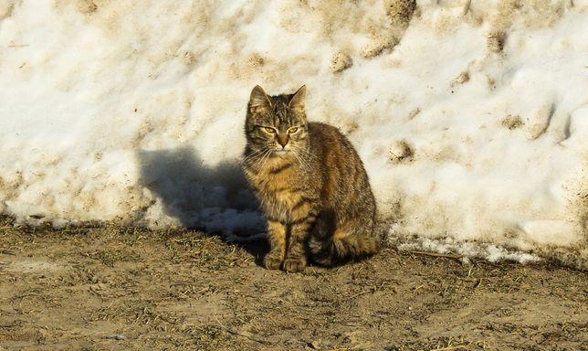 Śliczna kotka szuka domu