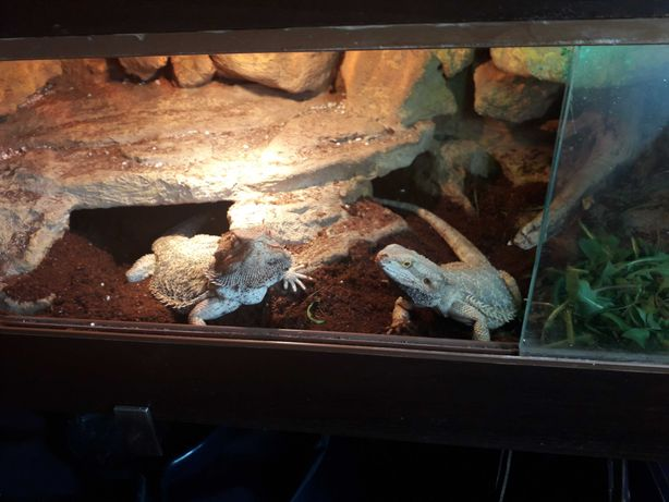 agamy brodate plus terarium z plyty meblowej