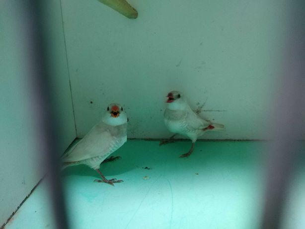 Pássaros exoticos