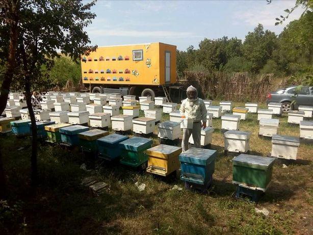 Пчелопакеты,матки, пчелосемьи
